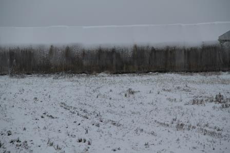 SNOW PIPPA 013