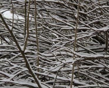 SNOW PIPPA 014