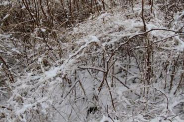 SNOW PIPPA 021