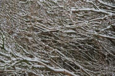 SNOW PIPPA 025
