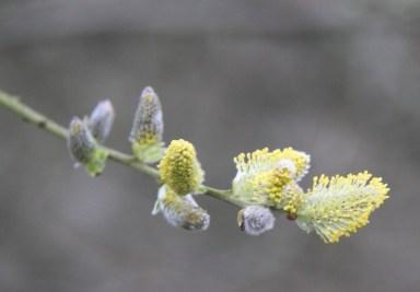spring 017
