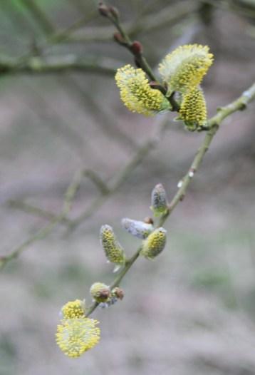 spring 018